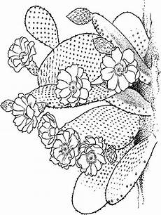Cactus Plant Coloring Pages Cactus Coloring Pages And Print Cactus Coloring