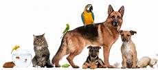 world s top pet animal websites for pet