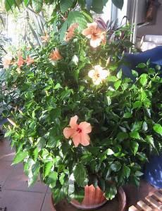 die richtige trittschalldaemmung fuer jeden f 252 r jeden gibt es die richtige pflanze
