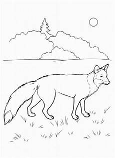 Kostenlose Ausmalbilder Zum Ausdrucken Fuchs Ausmalbilder Zum Drucken Malvorlage Fuchs Kostenlos 2