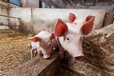 world farm animals day every october 2nd days of the year