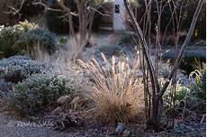Gräser Im Winter - gartenblog geniesser garten winterbilder vom garten