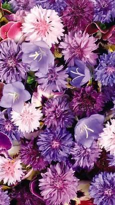 iphone purple flower wallpaper purple flowers hd iphone wallpaper purple flowers