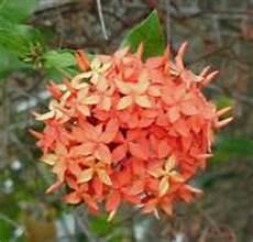 flor tipica del estado falcon clima del estado falc 243 n venezuela