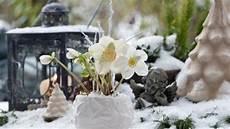 Die Christrose Erfreut Uns Im Winter Mit Ihren Wei 223 En