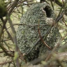 welcher vogel baut welches nest kt 243 ry z polskich ptak 243 w buduje takie misterne gniazdo