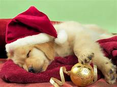 merry christmas puppy dreaming pinterest