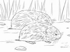 coloring pages 17531 brown lemming coloring page supercoloring