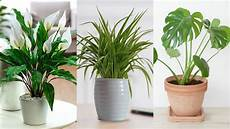 the 6 best office plants to boost your productivity youtube