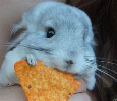 31 cute animals that will fill your heart with photos