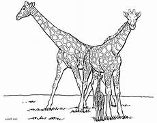 Malvorlagen Giraffe Ausdrucken Print Giraffe Coloring Pages For To