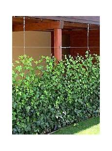 efeu sichtschutz selber machen pergola mit sichtschutz aus efeu bepflanzung efeu und
