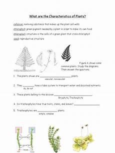 1 plant characteristics worksheet plants moss
