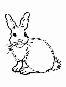 rabbits coloring pages and print rabbits
