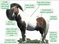Shetlanders :: paarden