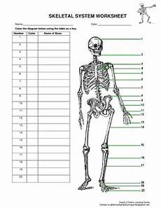 skeletal system worksheet by family 2 family learning