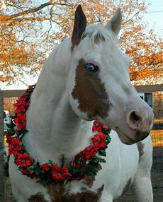 100 best christmas horses images pinterest christmas horses horses and merry christmas