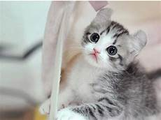 Newsviewintl Y 100 Dp Bbm Kucing Anggora Terbaru Lucu