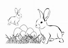 Ausmalbilder Osterhasen Familie Lustige Und Realistische Ausmalbilder Tieren