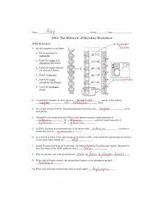 dna replication worksheet answer key 1 pdf name i l e period date dna the molecule of