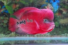 92 S Generations Ikan Hiasan