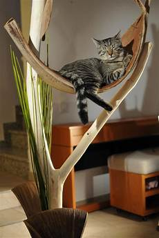 18 best kurs katzenbaum images on pets cat