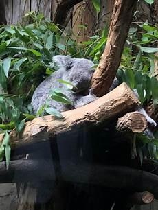 zoo duisburg duitsland beoordelingen tripadvisor