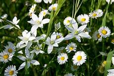 fiore con la a e tempo di rinascere the bach flowers