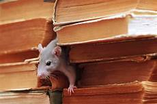 faire fuir les souris quelles sont les bonnes m 233 thodes pour faire fuir les souris