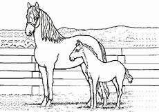 Ausmalbild Pferde Fohlen Ausmalbilder Pferde Mit Fohlen Und Reiter Ausmalbilder