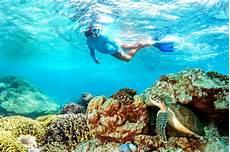 snorkeling in the seychelles alphonse island