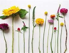Flower Wallpaper Laptop by Flowers Laptop Wallpapers Top Free Flowers Laptop