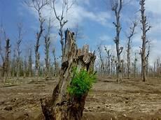 Krisis Lingkungan Hidup Yang Di Hadapi Masyarakat Dunia