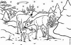ausmalbilder elch kostenlos malvorlagen zum ausdrucken
