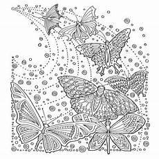 Ausmalbilder Erwachsene Schmetterling Butterflies Zencolor Moments Dibujos De Mariposas