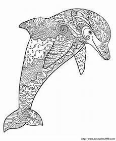 ausmalbilder sommer bild und dort ist ein delfin