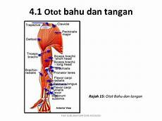 Resume Sistem Muskuloskeletal 1 Anatomi Dan Fisiologi