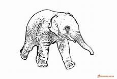 coloring pages of elephants and print for free