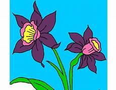 dibujos de la orquidea el araguaney y el turpial para colorear dibujo de orqu 237 dea pintado por porchaco10 en dibujos net el d 237 a 26 05 12 a las 01 03 28 imprime