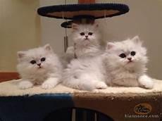 leclerc vetement professionnel clermont ferrand chatons persan a donner contre bon soin a vendre 224