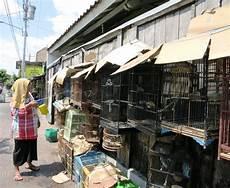 Eulen Malvorlagen Jogja Indonesien Reiseberichte Yogyakarta Die Indonesier