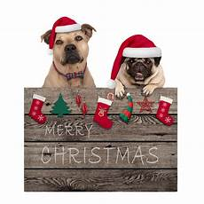 merry christmas dogs cute pug puppy and terrier dog
