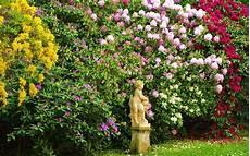 immergrüne pflanzen sichtschutz how to plant a shrub in the garden border david domoney