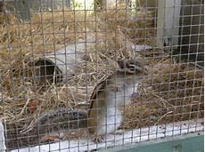 gabbia per scoiattolo giapponese il mio tamias sibiricus