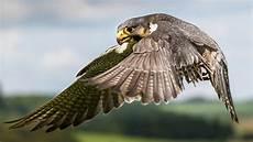tierische flieger tierwelt natur planet wissen