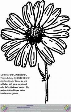 Ausmalbilder Blumen Wiese Ausmalbild Blumen Der Blumenwiese Clipart