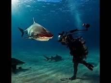 Aksi Gila Fotografer Nekat Foto Quot Ikan Hiu Quot Di Dasar Laut