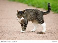 Katzen Haustiere Individualisten Im Wandel Der Zeit