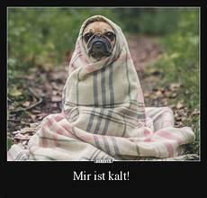 Mir Ist Kalt Bilder - 60 best animales images on animals other and food