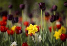 Bildergebnis für frühlingsblumen